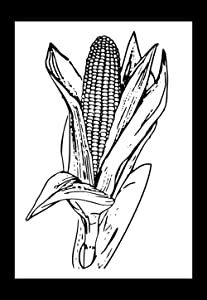 Gifts Delight Laminated 24x34 inches Poster: Corn Ear Maize Agriculture Grain Harvest Crop Food