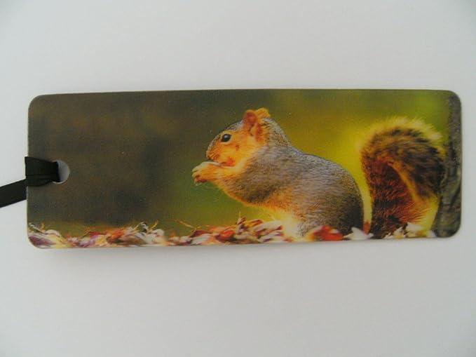 1x 3D Lesezeichen Eichh/örnchen 15x5cm Tiere Wackelbild Wackelkarte Buchzeichen Bookmark B/ücher Buch