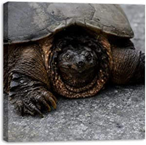 Framed Canvas Wall Art Snapping Tortoise Oil Painting Artwork Picture Posters Wall Decor for Living Room Bedroom Bathroom Office Home Decoration