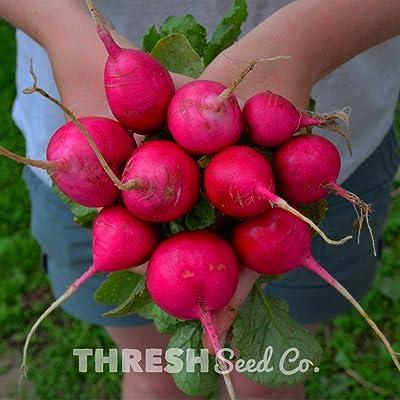 German Giant Radish - 150 Seeds : Garden & Outdoor
