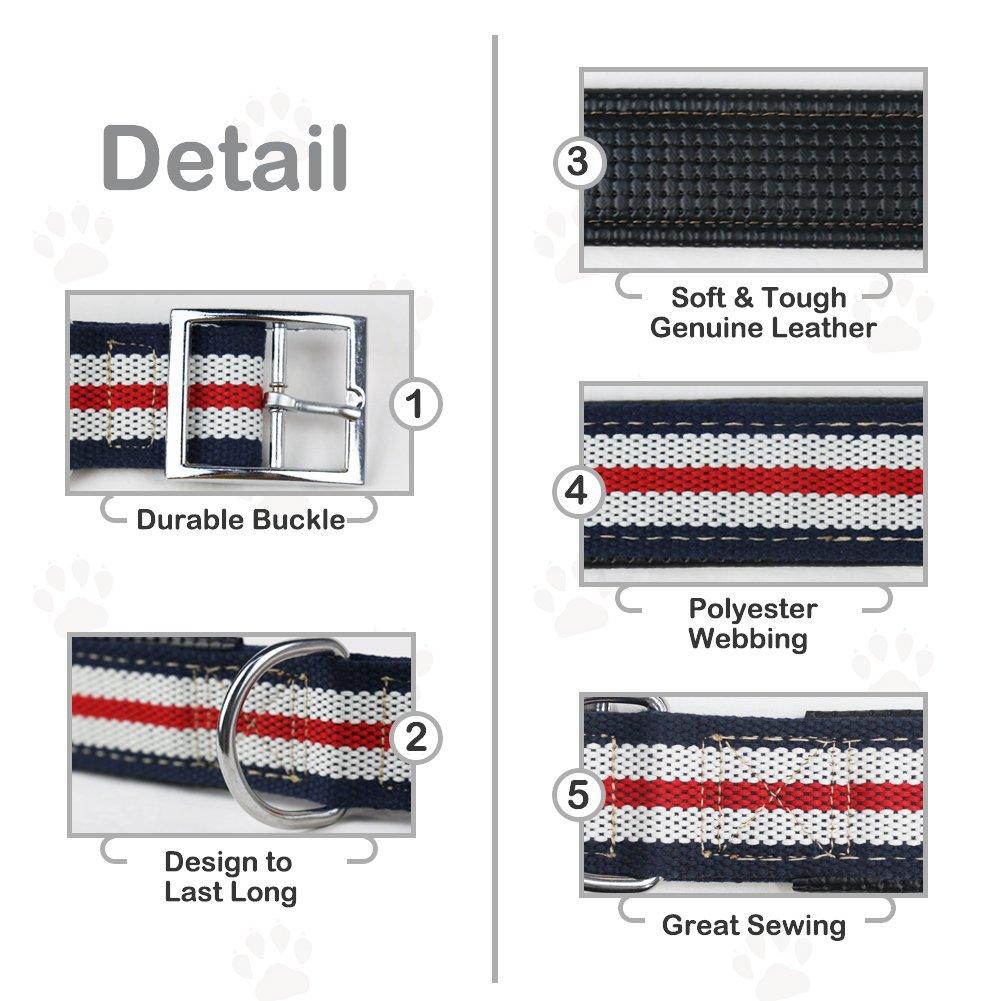Petfu Personalised Luxury Leather Dog Collar, with Padding, Robust, Medium/Large, White