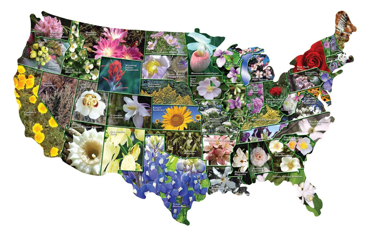 TDC Games USA Shaped State Flowers Puzzle