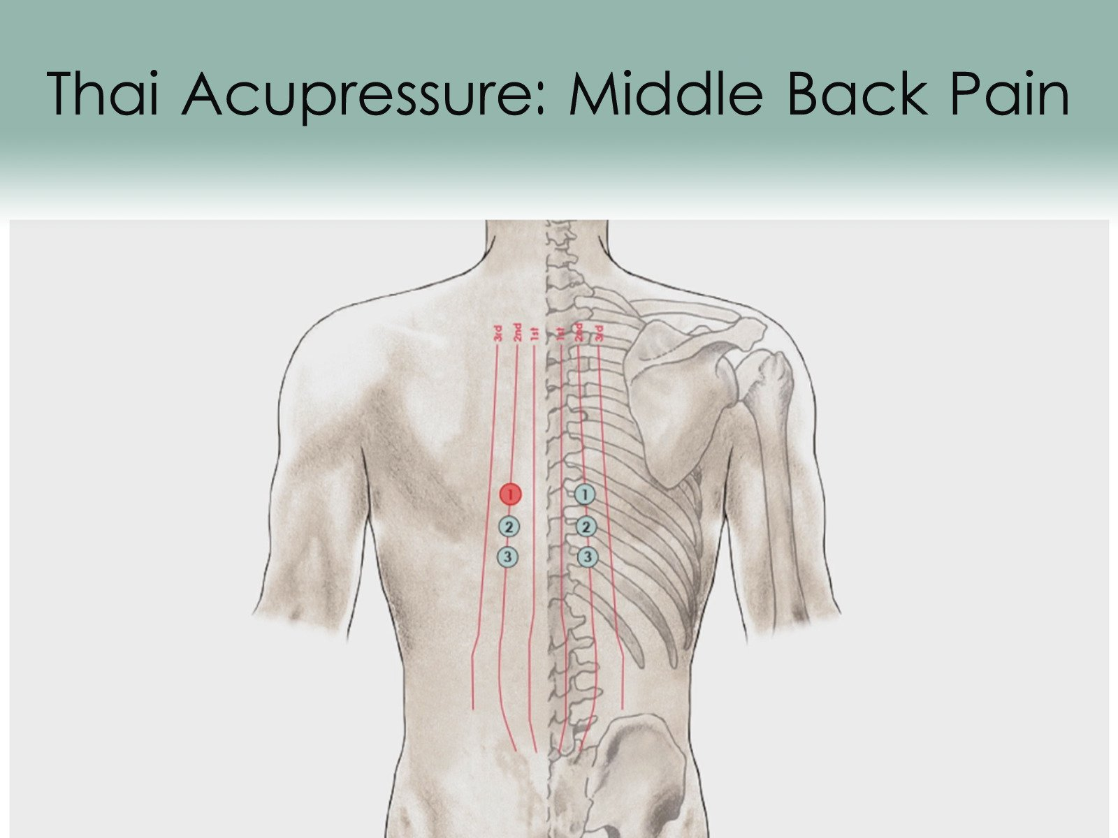 Treatment Routine 32 - Middle Back Pain