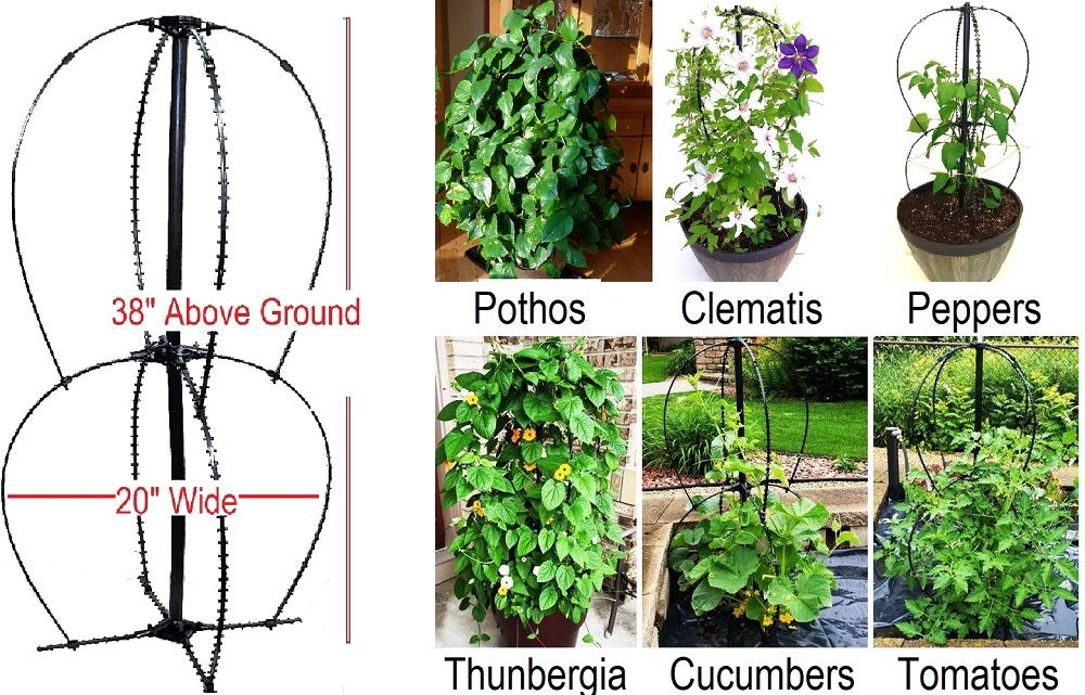 Scroll Trellis Ideal for Small Spaces, Pothos, Tomato, Climbing Plant Obelisk for Planters or In-ground 38 Inches Tall, Lead, Mercury, BPA-Free, Extra Wide 20 inch X 20 inch Wide 1 Plant Support