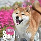 2018年大判カレンダー 柴犬 ([カレンダー])