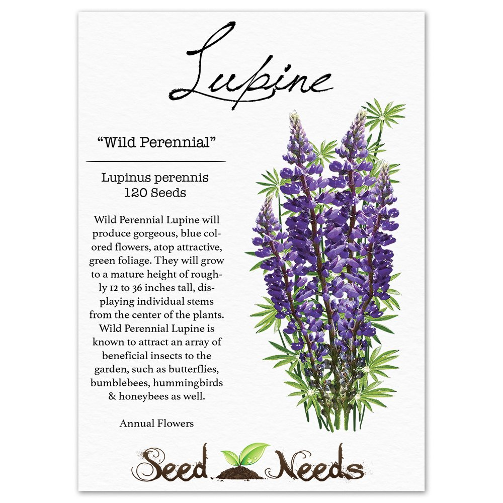 How to plant lupine seeds - Amazon Com Package Of 120 Seeds Wild Perennial Lupine Lupinus Perennis Non Gmo Seeds By Seed Needs Flowering Plants Garden Outdoor