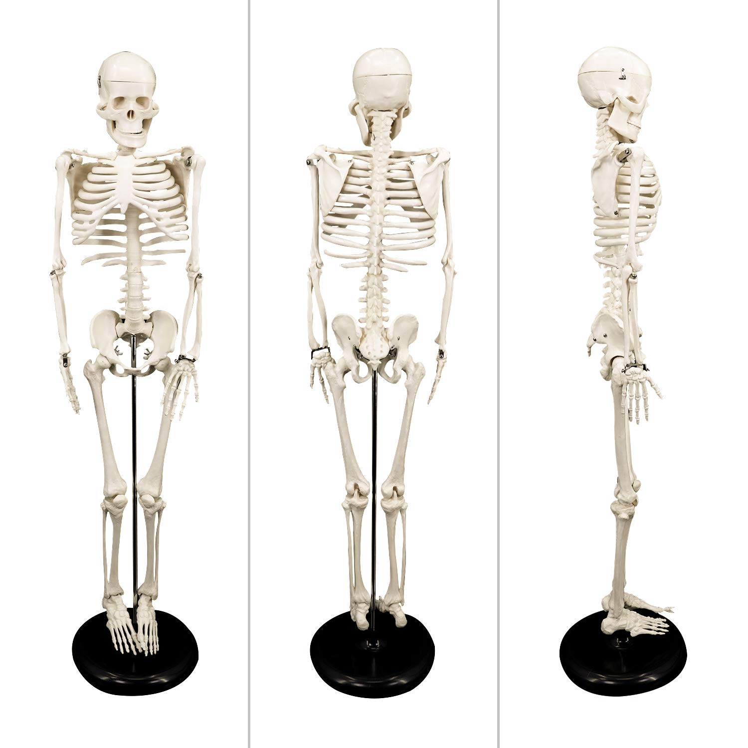 8 Koopro Anatomical Human Skeleton Model Removable Arms and Legs for Better Observing and Studying All Mobile Joints for Easy Manipulate Interactive Medical Replica for Educating and Teaching