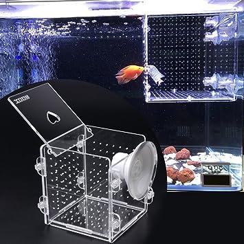 lpyfgtp - Caja de aislamiento para acuario, pecera, pecera, incubador de peces, para peces de bebé: Amazon.es: Hogar