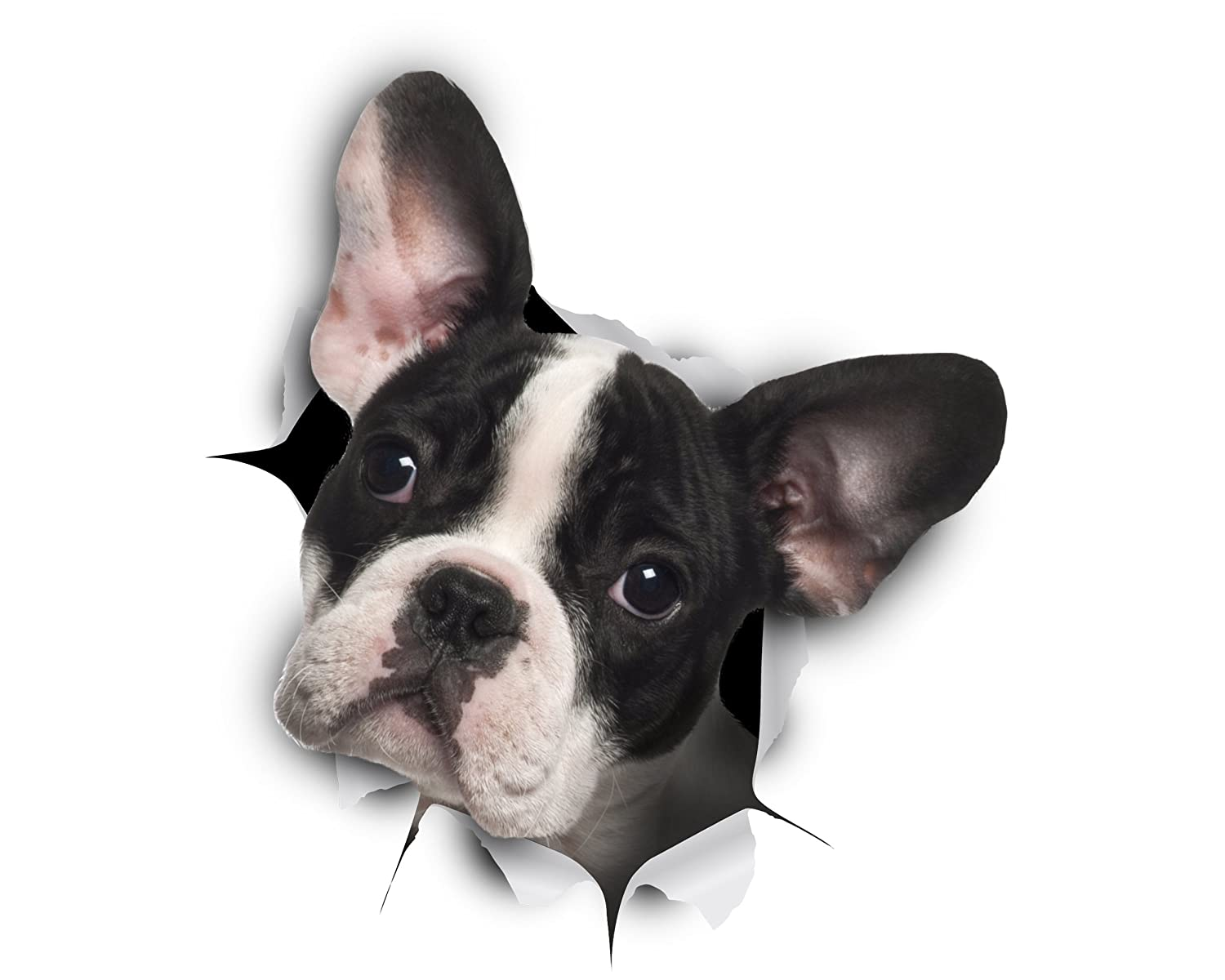 Winston & Bear 3D Dog Stickers - 2 Pack - Black and White French Bulldog Stickers for Wall, Fridge, Toilet and More - Retail Packaged Frenchie Stickers
