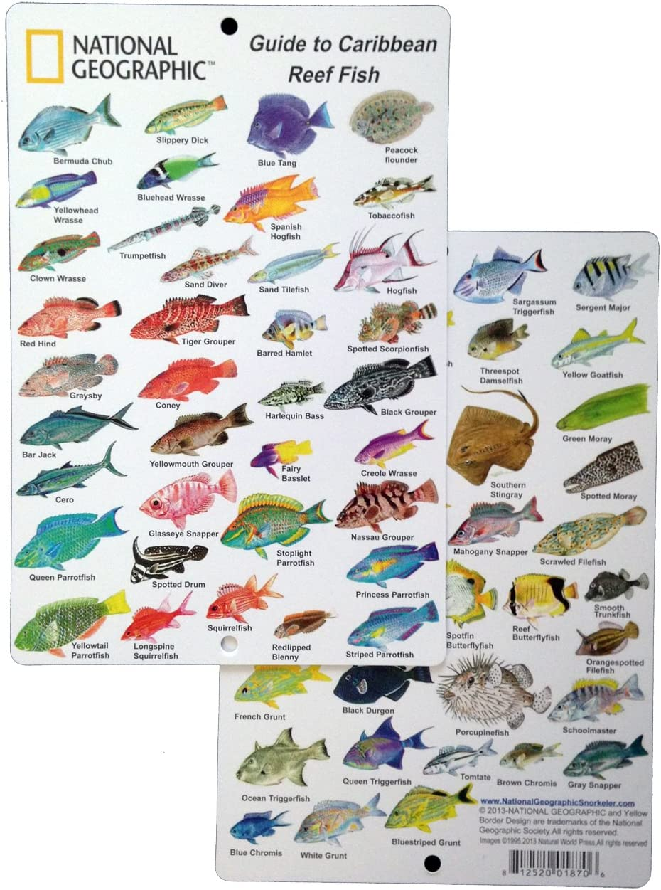 Fishes of the Caribbean Reefs