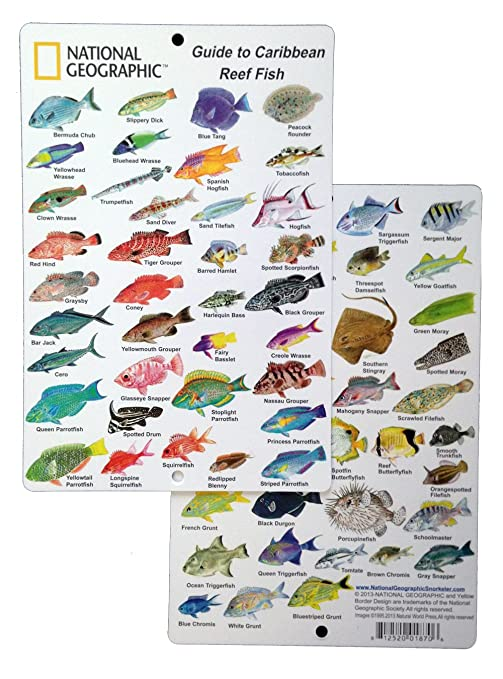 National Card Fish Geographic In To Caribbean 9 6 Guide Reef Id By - In