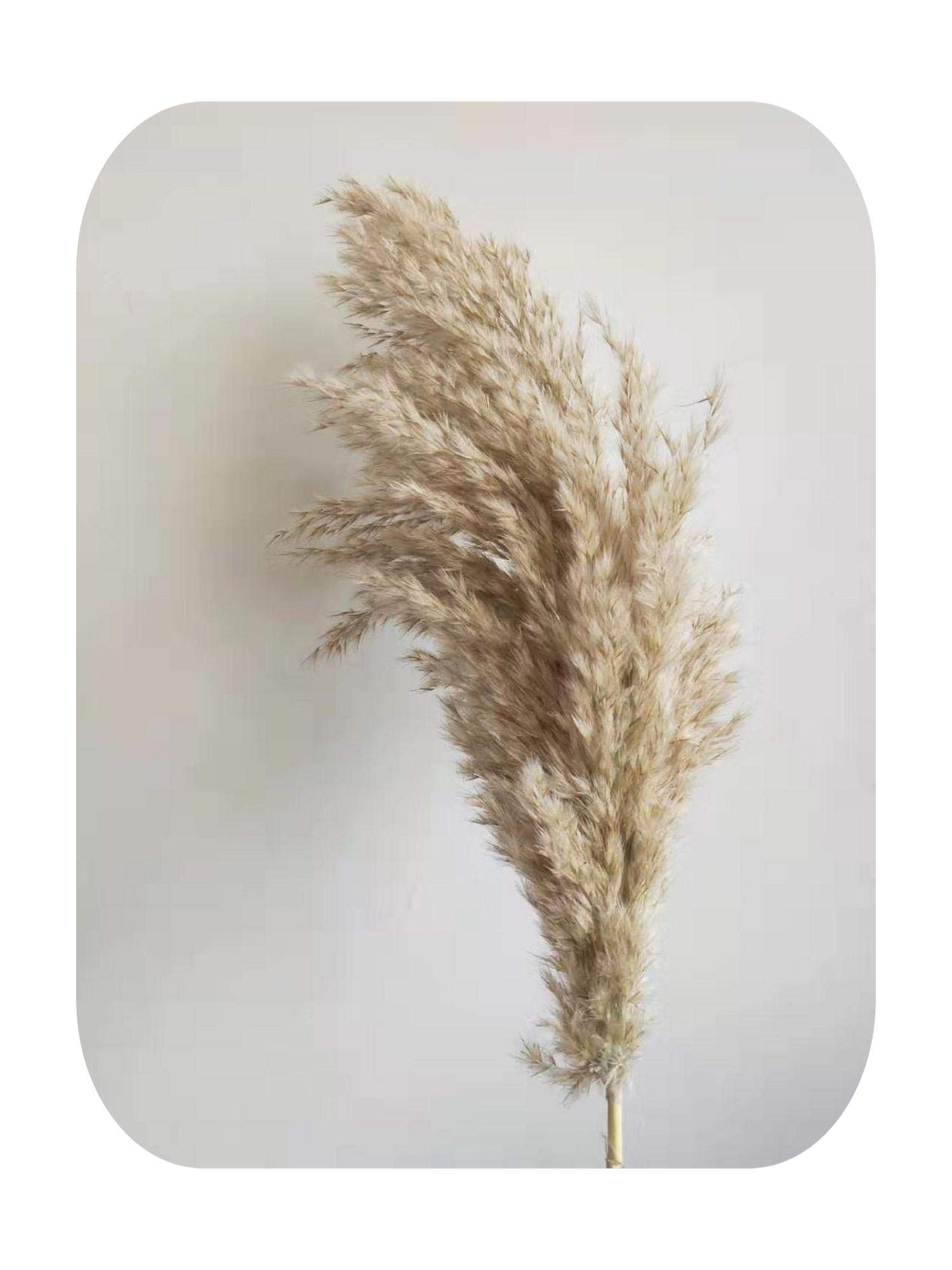 LAVOGUE 10Pcs Pampas Grass Bunch Large Dried Christmas Decorations for Home Wedding Flower Bunch Pampas Grass Natural Real Reed Plants -10Pcs Raw Color-L