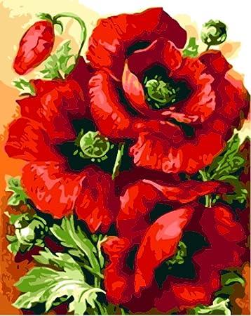 Obella Malen Nach Zahlen Kits Rote Mohnblumen Rot Mohn 50 X 40 Cm