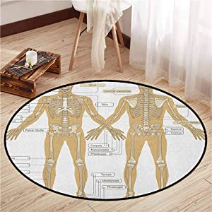 """Area Round Rugs,Human Anatomy,Diagram of Human Skeleton System with Titled Main Parts of Body Joints Picture,Children Bedroom Rugs,3'3"""" White Tan"""