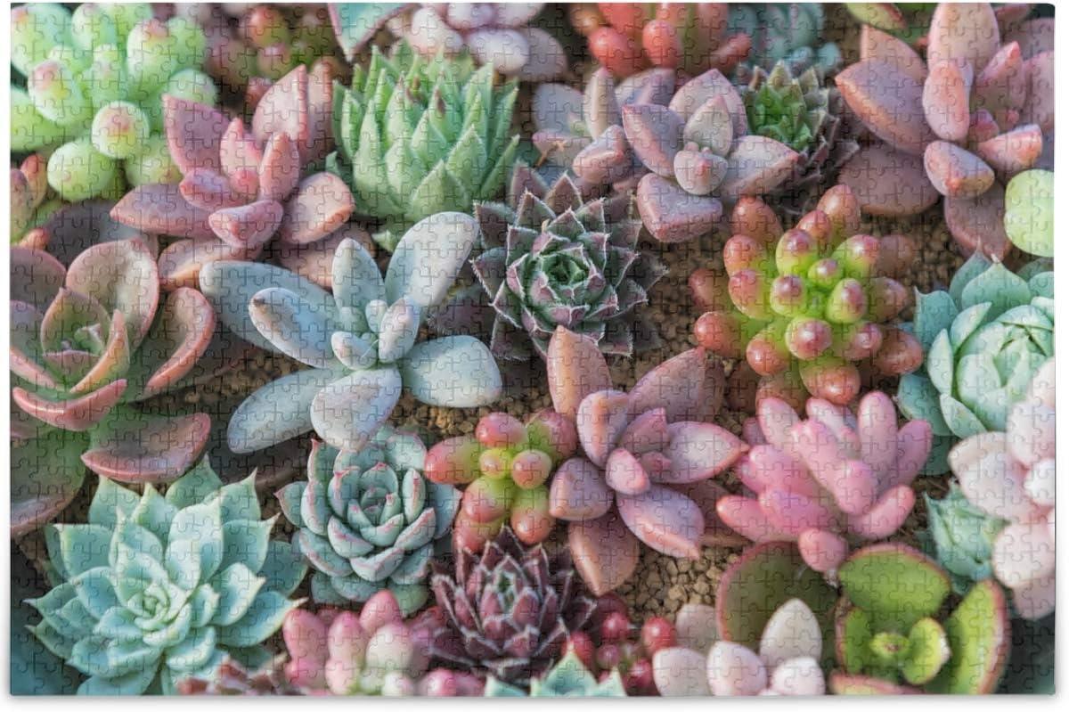 Oarencol Suculento Kalanchoe Cactus Plantas Rompecabezas de 500 piezas para adultos y niños, Multicolor, 500 pieces
