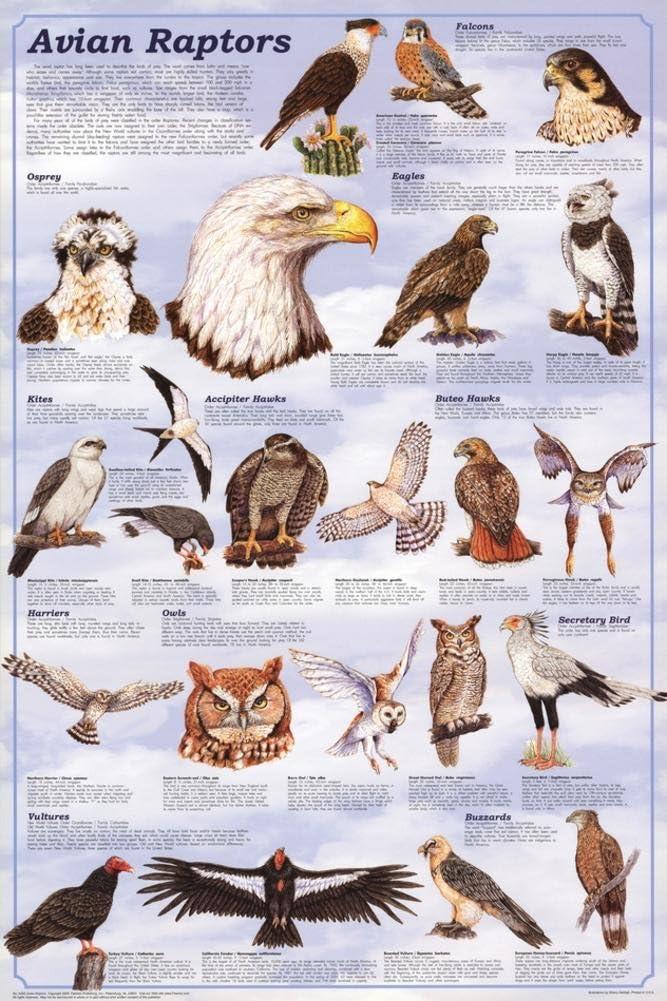 Birds Educational Science Teacher Classroom Chart Print Poster 24x36