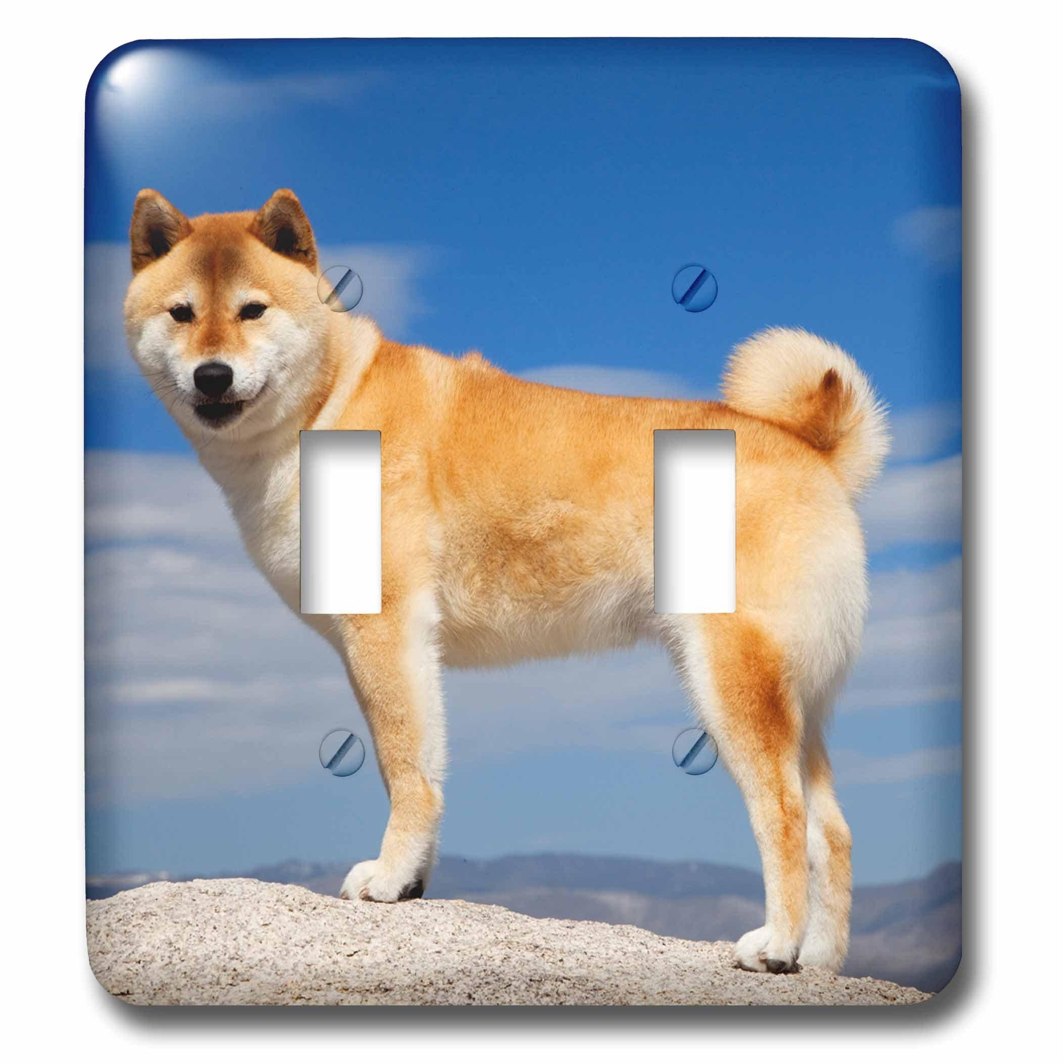 3dRose LSP_258815_2 USA, California, Bishop. Shiba Inu Dog Posing Toggle Switch,