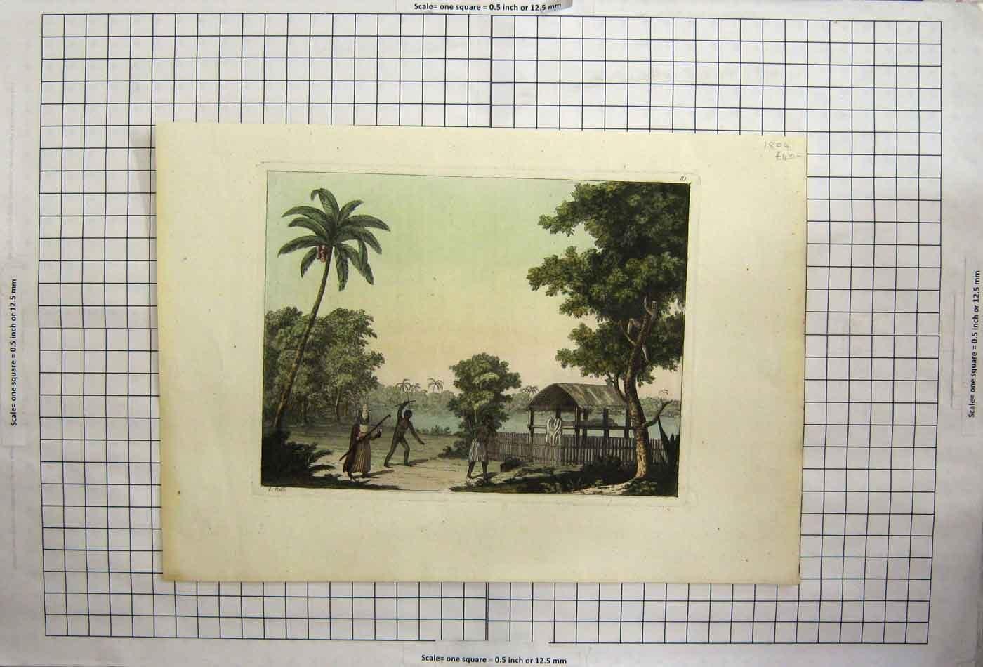 Viejo Original antiguo victoriano impresión África árbol de ...