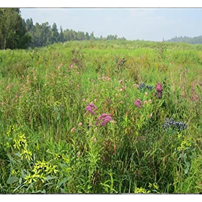 Wetland Meadow Mix (Mix 129), Seed Packet, True Native Seed (Southeastern US) : Herb Plants : Garden & Outdoor