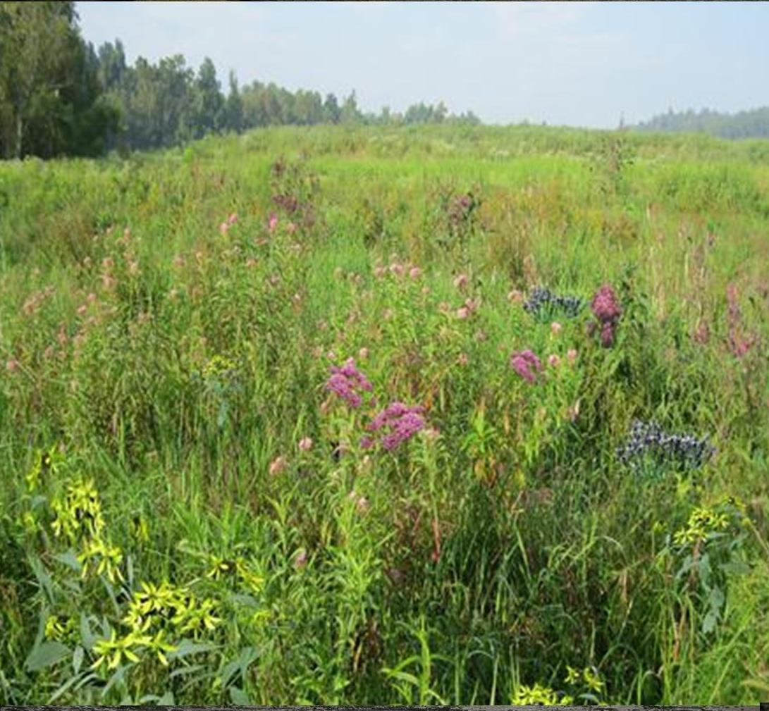 Wetland and Pond Edge Mix (Mix 131), 1 PLS Pound, True Native Seed by Roundstone Native Seed