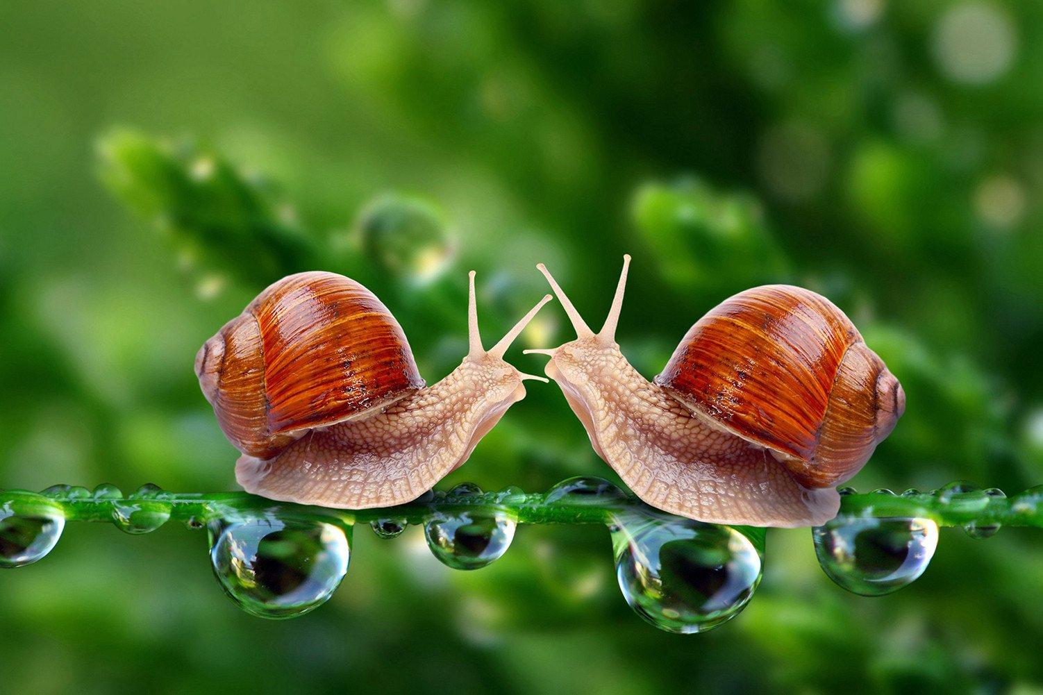 CHOIS Custom Films CF3312 Animal Snails Drops Glass Window Decor DIY Stickers 4' W by 3' H