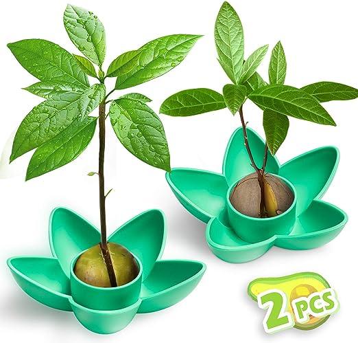 Tazón de 2 piezas de planta de aguacate MOSRACY, regalo de jardín ...