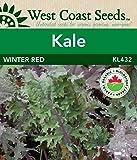 Kale Seeds - Winter Red Organic