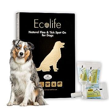Amazon.com: Ecolife todo Tratamiento natural y de pulgas ...