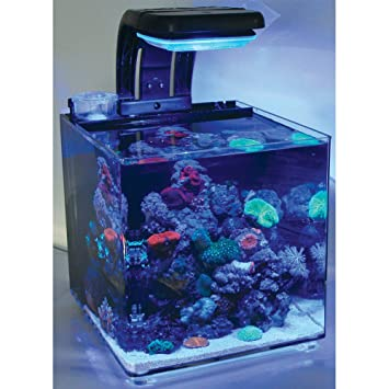 TMC - Micro Hábitat 30 Nano para acuario de agua salada 30 L, completo: Amazon.es: Productos para mascotas