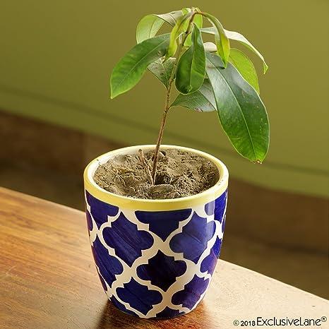 ExclusiveLane Moroccan Roots Handpainted Living Room Garden Decorative Flower Pots Cum Ceramic Planter (Set of 1)