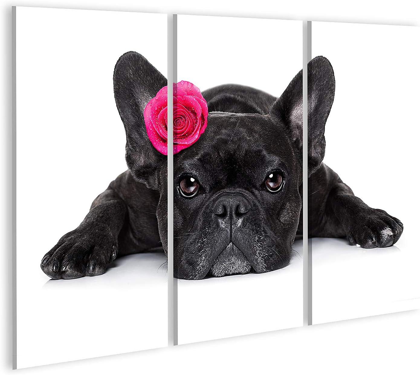 islandburner Cuadro en Lienzo Un Bulldog francés mirándote Mientras estás Tumbado en la Planta Baja o en el Suelo con un Valentín Cuadros Modernos Decoracion Impresión Salon