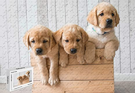 Amazon Com 500 Piece Jigsaw Puzzle Golden Retriever Three Cute
