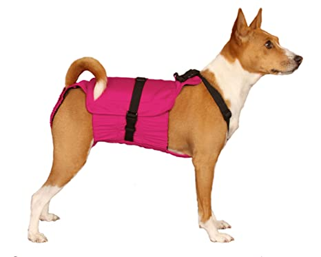 male dog diaper wrap