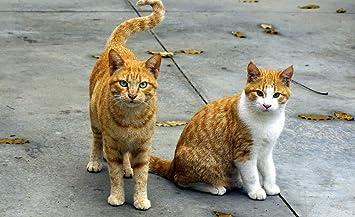 OKOUNOKO Rompecabezas De 1000 Piezas para Adultos Animales ...