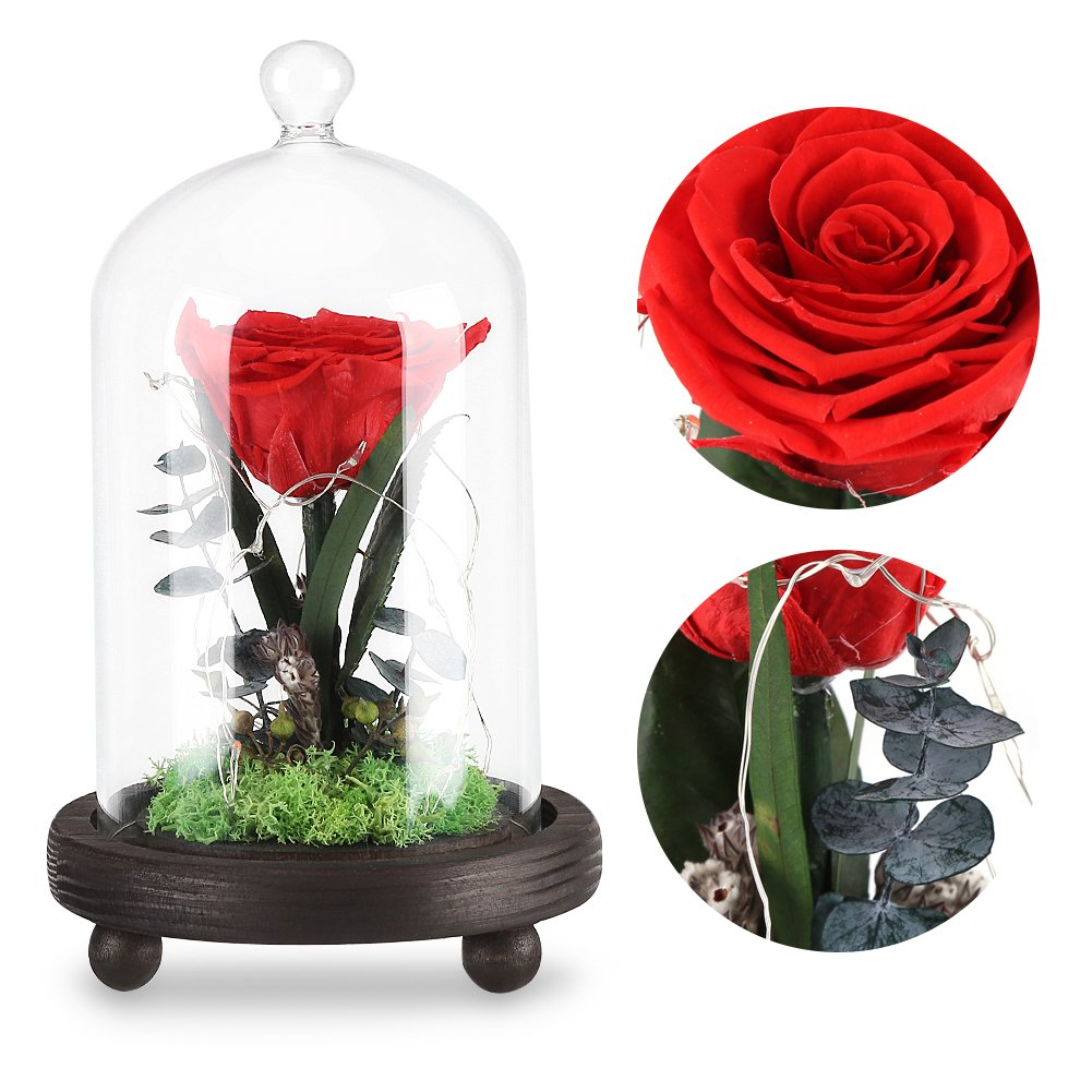Amazon Com Preserved Rose Flowers Eternal Festive Forever Love Red