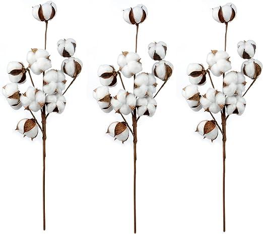 jycra algodón tallos, Natural plantas secas flores algodón ramo ...