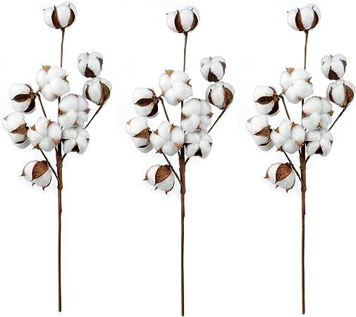 jycra algodón tallos, Natural plantas secas flores algodón ramo con tallo Farmhouse estilo Floral para la boda decoración de casa oficina fiesta jardín etc – 3 unidades: Amazon.es: Hogar