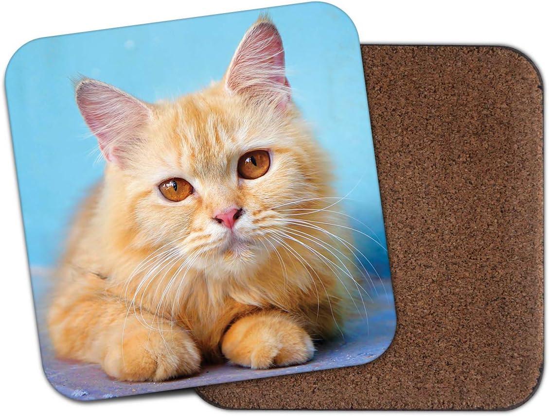 Adorable Ginger Tom Cat posavasos – Gatos amarillos ojos lindos ...
