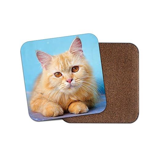 Adorable Ginger Tom Cat posavasos - Gatos amarillos ojos lindos ...