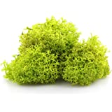 NW Wholesaler Preserved Reindeer Moss for Terrariums, Fairy Gardens, Arts & Crafts - 9 Colors to Choose from (Chartreuse)