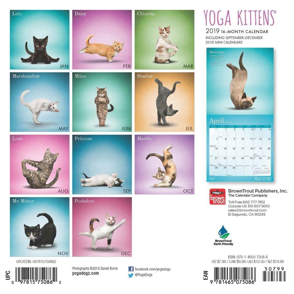 Amazon.com: Yoga gatitos Mini calendario de pared, gatitos ...