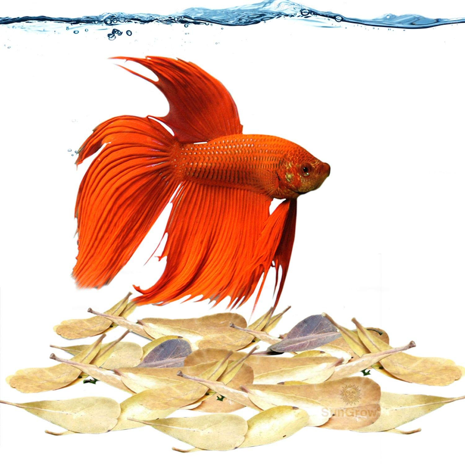 """SunGrow Miracle Fin Rot Mini Catappa Leaves, Betta Medicine & Water Supplement, Keep Bettas Healthy and Happy, Contains Beneficial Compounds, 2"""" (5cm) Long Indian Almond Leaves, 50 Leaves"""
