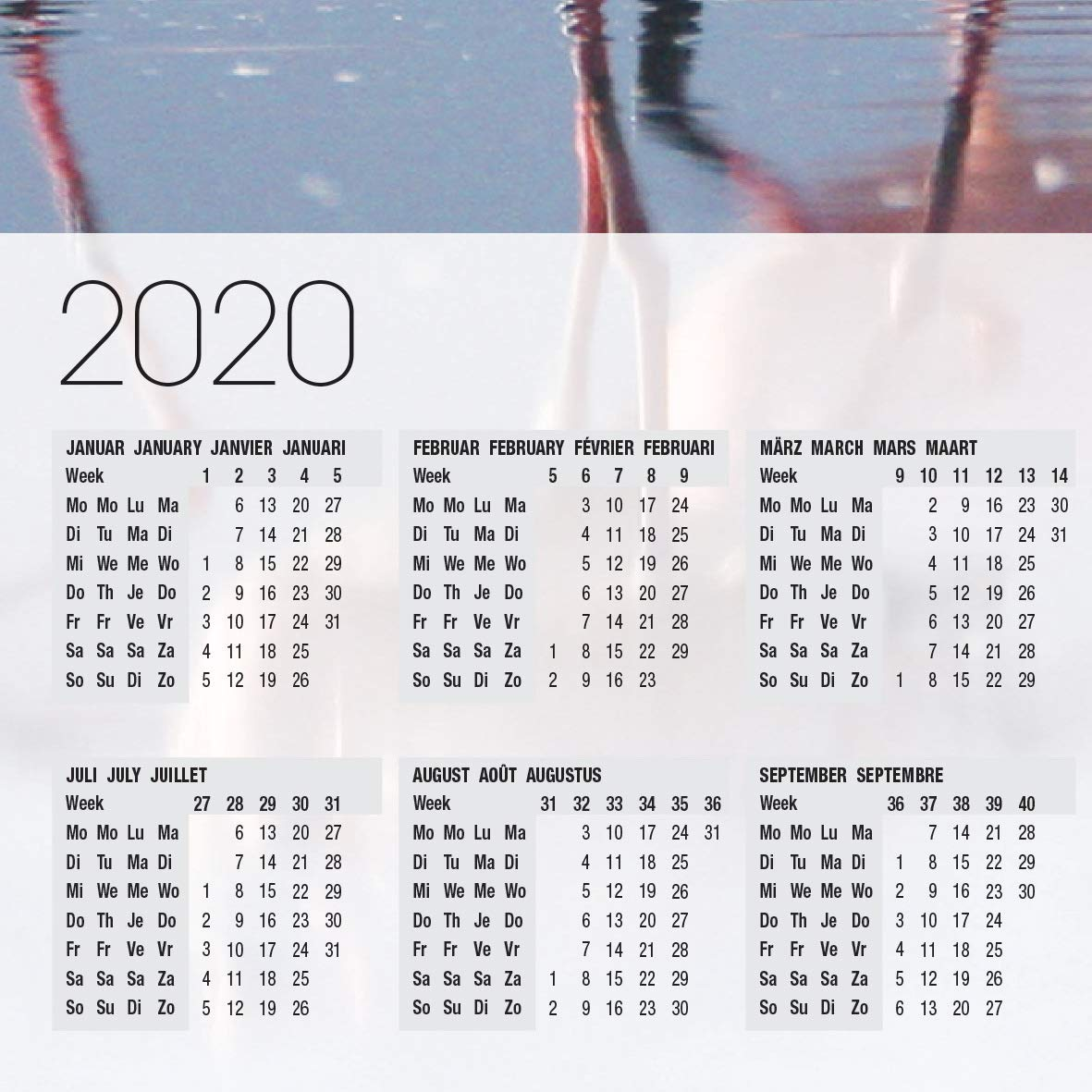 con calendario SIGEL HO472 Sottomano da scrivania soggetto Flamingos 59.5 x 41 cm carta 30 fogli