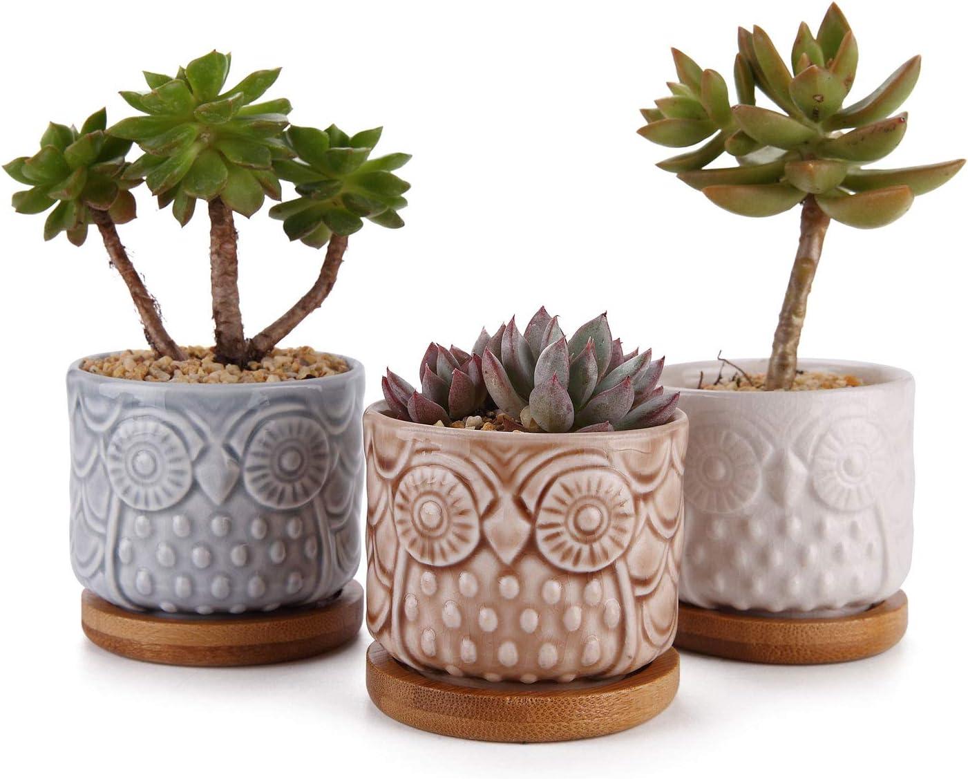 T4U Planta Maceta de Suculento Vidriado 6.5CM Paquete de 6, Cactus Maceteros de Ventana Cajas Decoración para Mesa de Comedor de Estar Regalo para Cumpleaños Boda Navidad