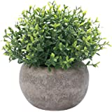 HC STAR Artificial Plant Potted Mini Fake Plant Decorative Lifelike Flower Green Plants