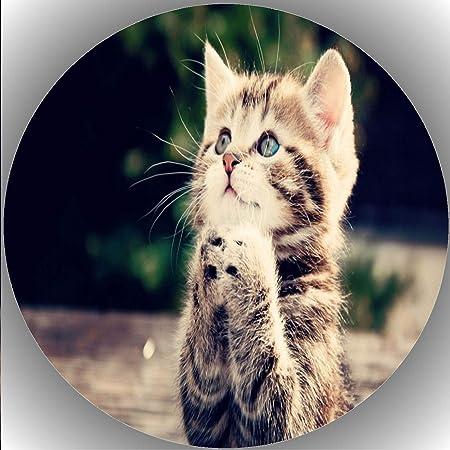 Gluckwunschkarte Zum Geburtstag Katze Helen Abkhazi