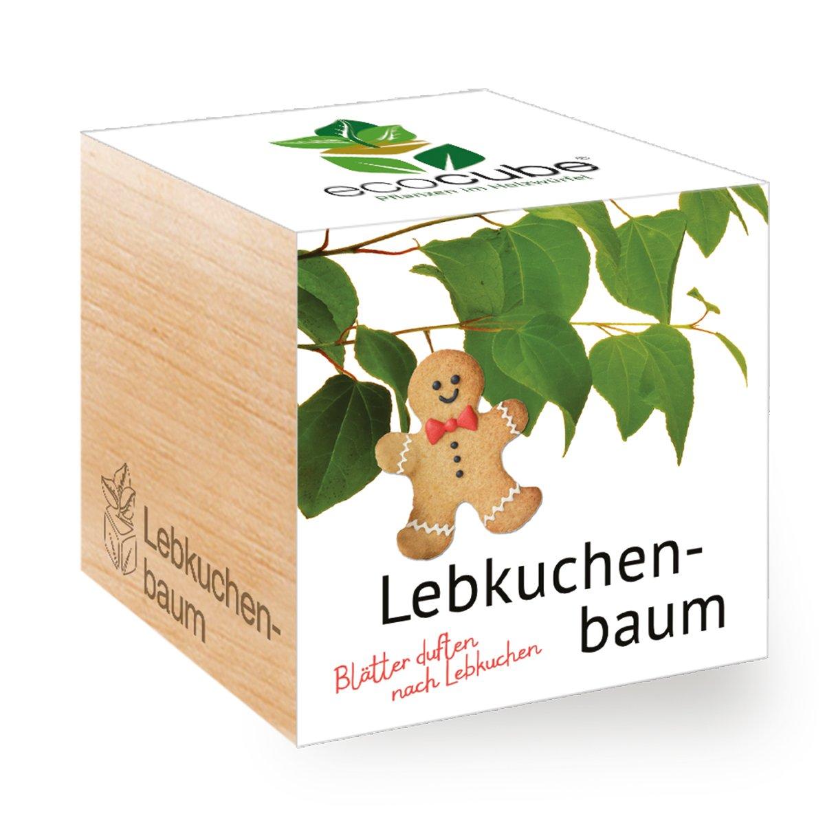 Lebkuchenbaum im Holzwürfel Ecocube