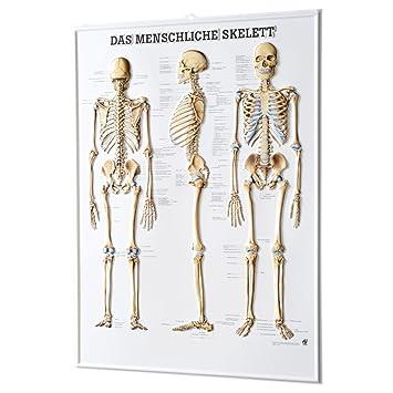 Das menschliche Skelett Relieftafel Anatomie 74x54 cm medizinische ...