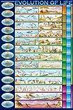 Educational–Bildung Poster Evolution of Life Die Evolution + Zusatzartikel, m. 2 Leisten, schwarz, 61 x 91 cm