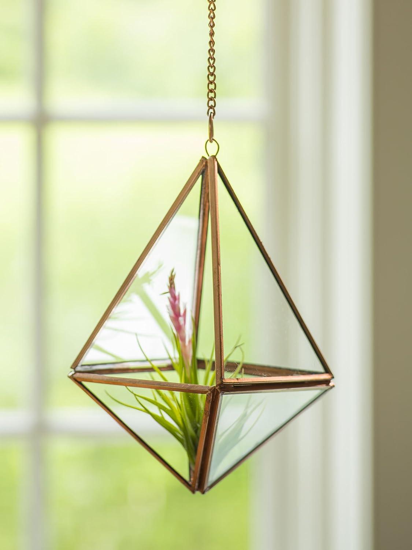 Amazon.com: Hanging Prism Terrarium: Home & Kitchen